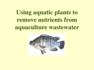 Using aquatic plants to remove nutrients from aquaculture wastewater