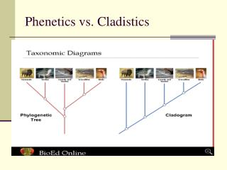 Phenetics vs. Cladistics