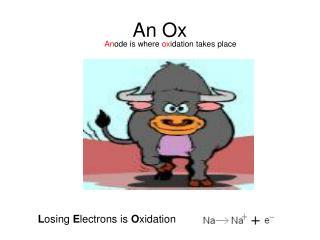 An Ox