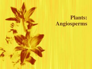 Plants: Angiosperms