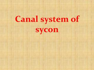 Canal system of sycon