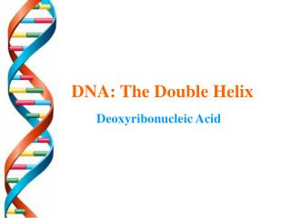 DNA: The Double Helix