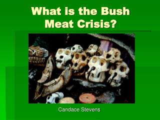 What is the Bush Meat Crisis?