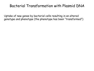 Bacterial Transformation with Plasmid DNA
