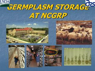 GERMPLASM STORAGE AT NCGRP
