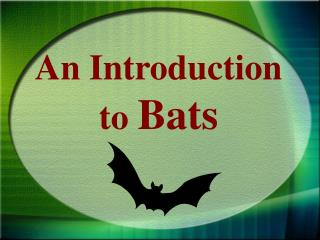 An Introduction to  Bats