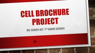 Cell Brochure Project