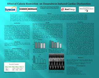 Effect of Calorie Restriction  on Doxorubicin Induced Cardiac Dysfunction