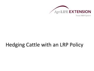 Hedging Cattle with an LRP Policy