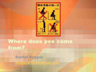 Where does pee come from?