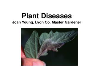 Plant Diseases Joan Young, Lyon Co. Master Gardener