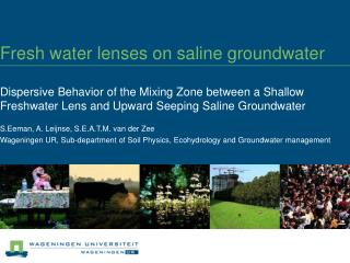Fresh water lenses on saline groundwater