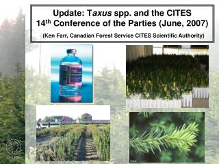 Brief History: CITES and  Taxus  species