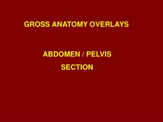 GROSS ANATOMY OVERLAYS