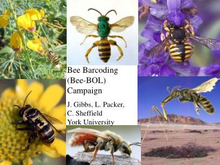 Bee Barcoding (Bee-BOL) Campaign