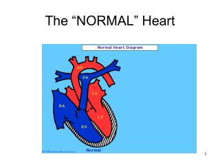 "The ""NORMAL"" Heart"