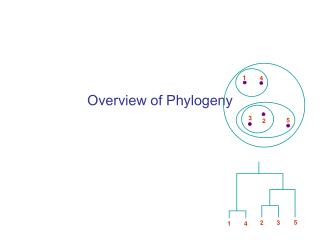 Overview of Phylogeny