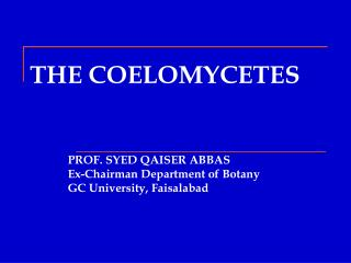 THE COELOMYCETES