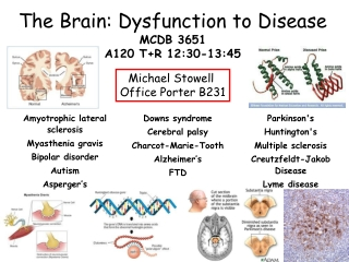 The Brain: Dysfunction to Disease MCDB 3651 A120 T+R 12:30-13:45