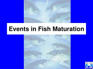 Events in Fish Maturation