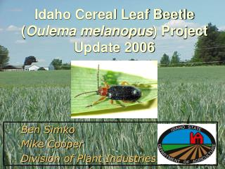 Idaho Cereal Leaf Beetle ( Oulema melanopus ) Project Update 2006