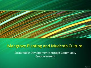 Mangrove Planting and Mudcrab Culture