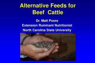 Alternative Feeds for  Beef  Cattle