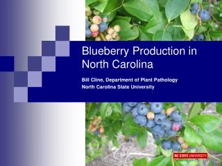 Blueberry Production in North Carolina
