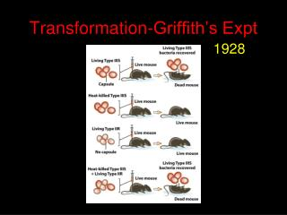 Transformation-Griffith's Expt