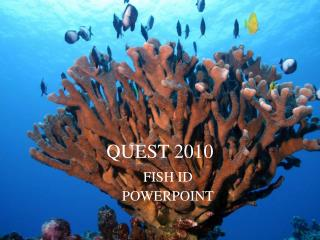QUEST 2010