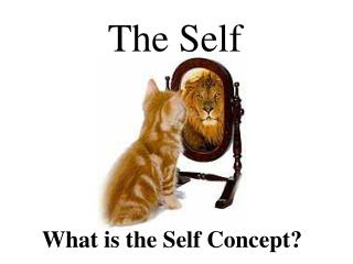 What is the Self Concept?