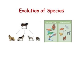 E volution of Species