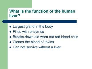 What is the function of the human liver?