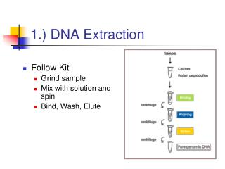 1.) DNA Extraction