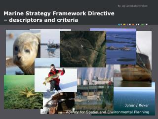 Marine Strategy Framework Directive – descriptors and criteria