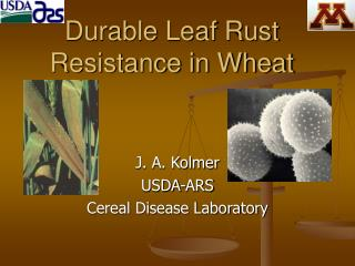 Durable Leaf Rust Resistance in Wheat