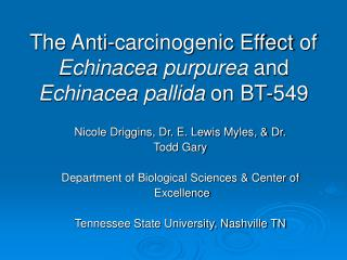 The Anti-carcinogenic Effect of  Echinacea purpurea  and  Echinacea pallida on BT-549