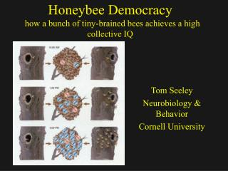 Honeybee Democracy   how a bunch of tiny-brained bees achieves a high collective IQ