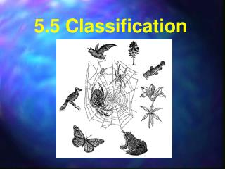 5.5 Classification