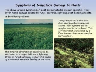 Symptoms of Nematode Damage to Plants