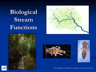 Biological Stream Functions