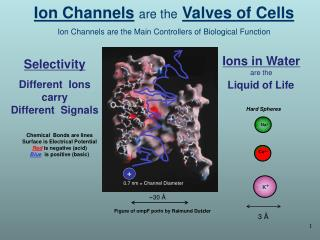 Ion Channels are the Valves of Cells Ion Channels are the Main Controllers of Biological Function