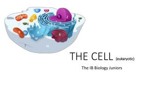 THE CELL  (eukaryotic)