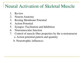 Neural Activation of Skeletal Muscle
