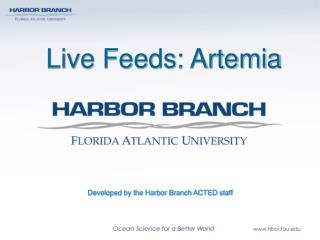 Live Feeds: Artemia