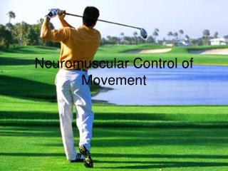 Neuromuscular Control of Movement