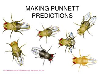 MAKING PUNNETT PREDICTIONS