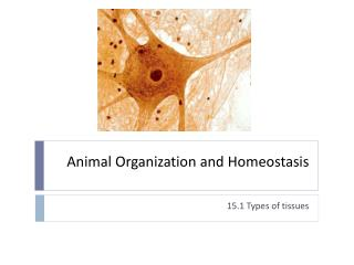 Animal Organization and Homeostasis