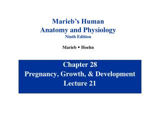 Chapter 28 Pregnancy, Growth, & Development Lecture 21
