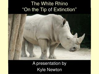 "The White Rhino ""On the Tip  of  Extinction"""